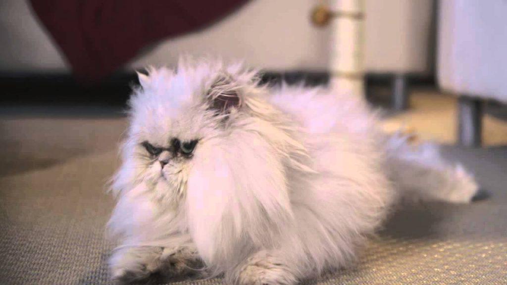 Female Voice Over for VCA Pet Cat Parasites Commercial