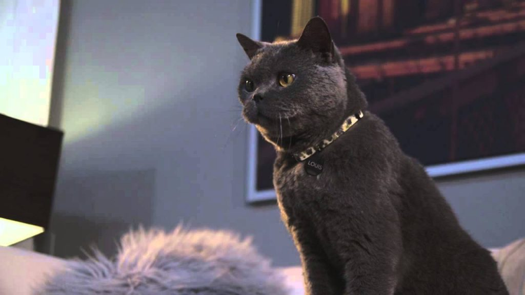 Female Voice Over for VCA Pet Cat Hair Loss Commercial